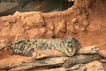 un petit tour dans la Ferme aux crocodiles